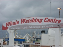 Whale watching out of Reykjavik