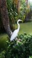 Totally unconcerned heron