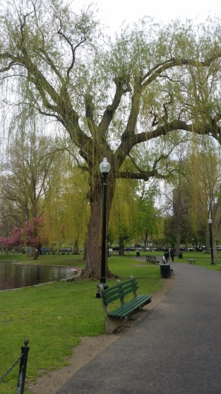 Boston Public Garden paths