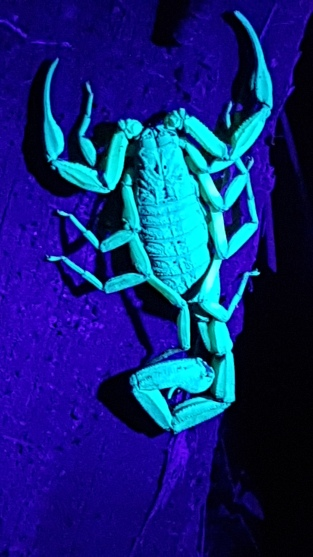 And under a UV light